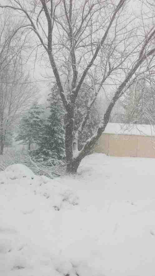 This is how the yard looked at 1:30 p.m.