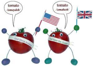 tomato-accent