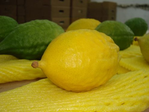 "This is an etrog. We call this a ""citron"" in English but I don't know that I've seen one in a normal supermarket."